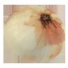 onion 100x100